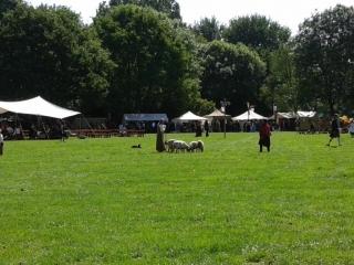 Herder met schapen en hond